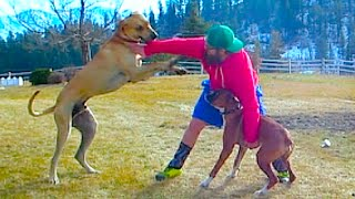 I GOT IN A DOG FIGHT!