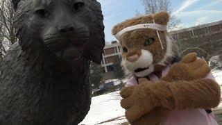Meet OUR Wildcat!