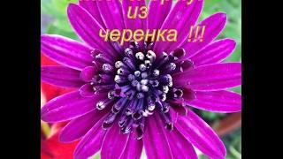 Вырастим цветы с наташей