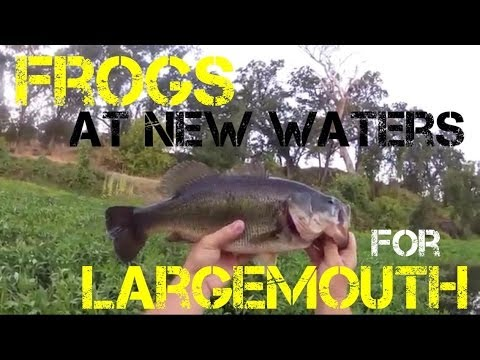 Bass Fishing- Frogs at New Waters for Largemouth