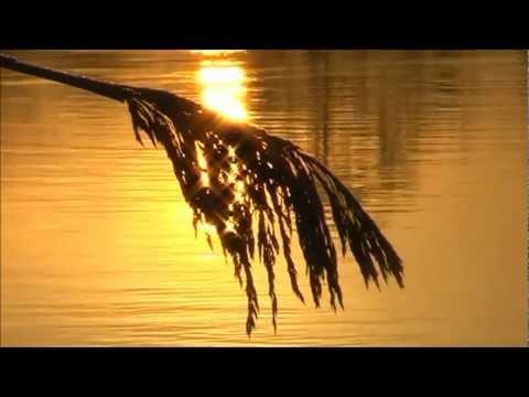 Van Morrison - Evening in June