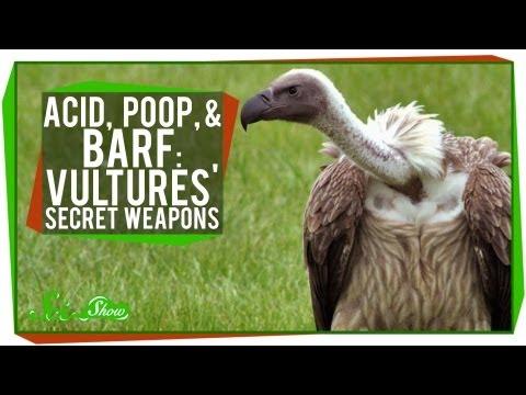 Acid, Poop, and Barf: Vultures' Secret Weapons