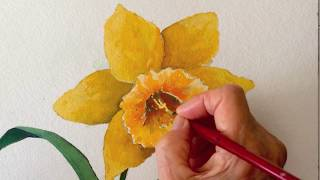 Daffodil watercolor tutorial, step by step lesson for beginners