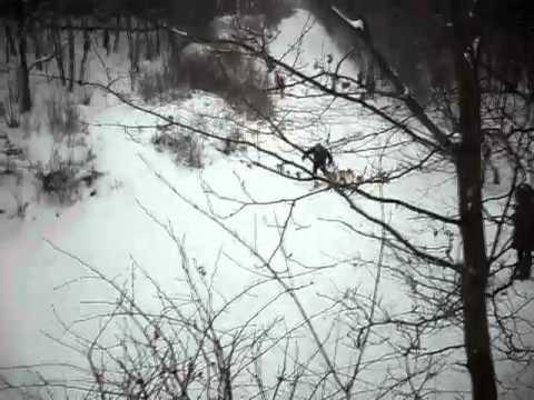 прикол лыжы прыжок ржака