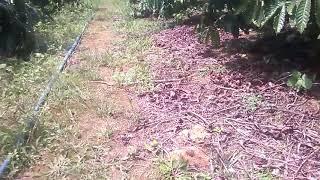 Phát hiện con rắn hổ ngựa trong vườn