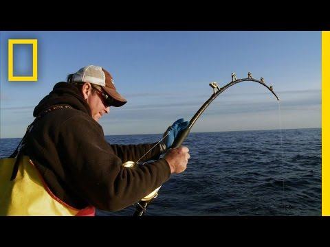 Wicked Tuna - Biggest Fish of the Year