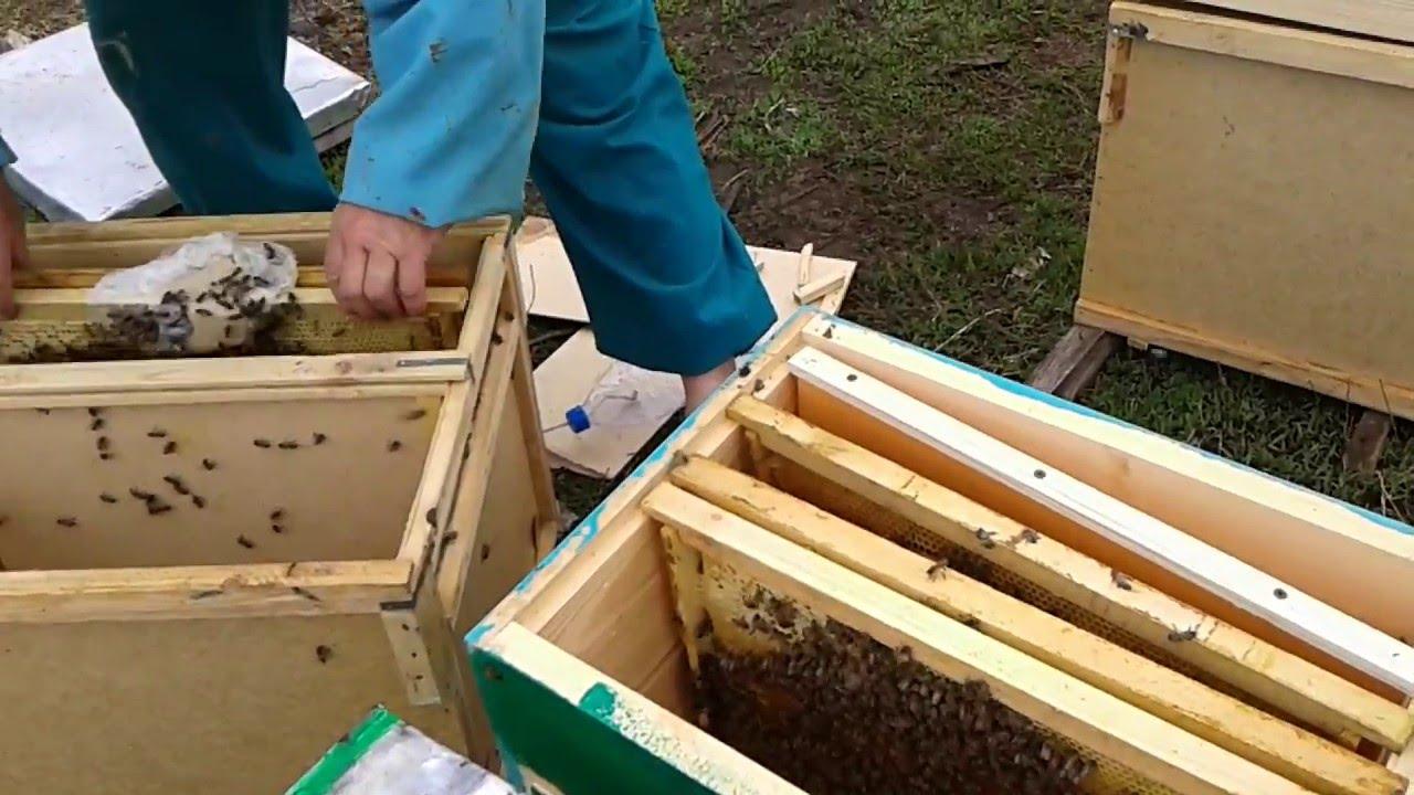 Как сажать пчел в новый улей 89