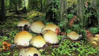 The Rare Mushroom Turtle