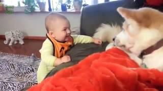 Awesome Dogs and Babies Funny Videos Compilation 2018 ||SUPER CUTE