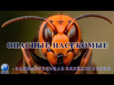 Серия 6. Cамые опасные насекомые мира для человека (шершень, комар, муха це-це и другие)