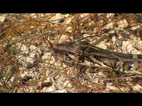 Florida panther national wildlife refuge for Florida fish wildlife