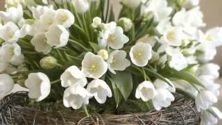 Download Lagu Musik Klasik Frederic Chopin    Spring Waltz and Tulips Gratis STAFABAND
