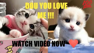 Cats  baby - Cute and Funny Baby Cat Amazing Videos Compilation