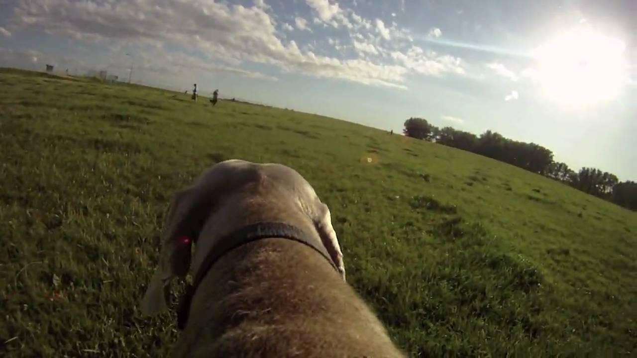 gopro dog cam test