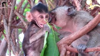 Animals Monkey, Watch baby cute monkey on the tree / popular daily