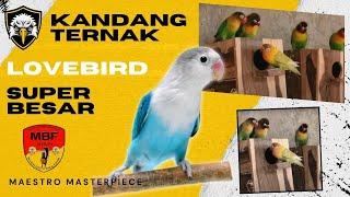 Kandang Koloni Love Bird ( Maestro Masterpiece )