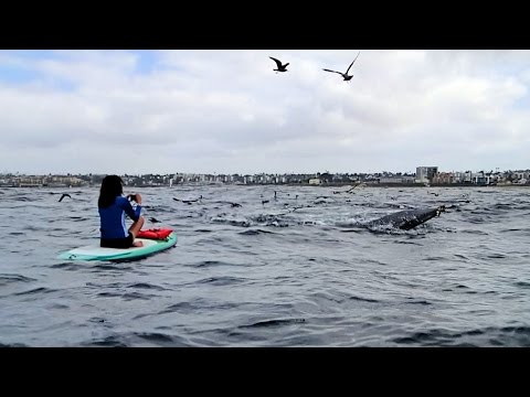 Whale Viewing from a SUP Board