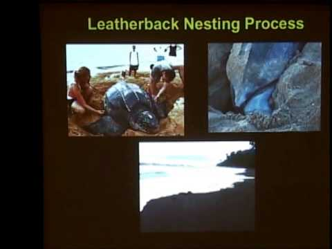 Large Pelagics Seminar Series 2013 Dr. Vince Saba on leatherback sea turtles and climate change