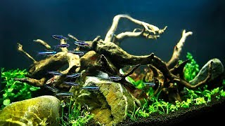 HOW TO Aquascape on a small budget NON-CO2 injection