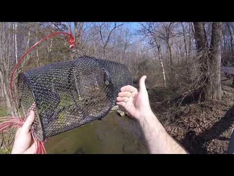 Setting My Crayfish Trap For The First Time This Season
