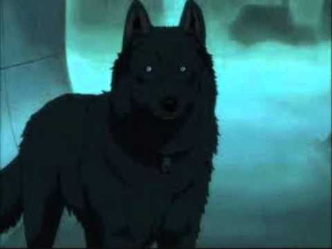 Black And White Moxie Dog