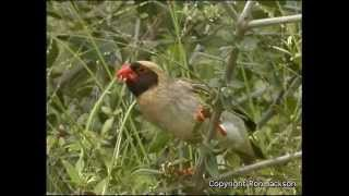 SOUTH AFRICA BIRDS AND ANIMALS