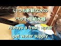 ペット用自動給水器(猫犬うさぎ小動物)ウォーターディスペ