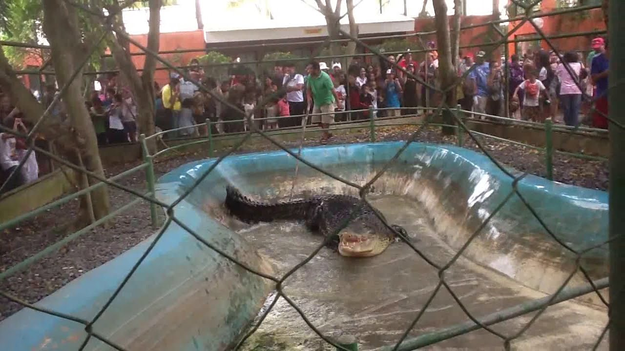 lolong crocodile youtube