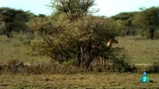 Documental  La vida en el paraiso salvaje