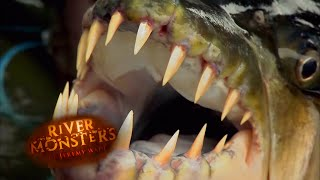 The Goliath Tigerfish - River Monsters