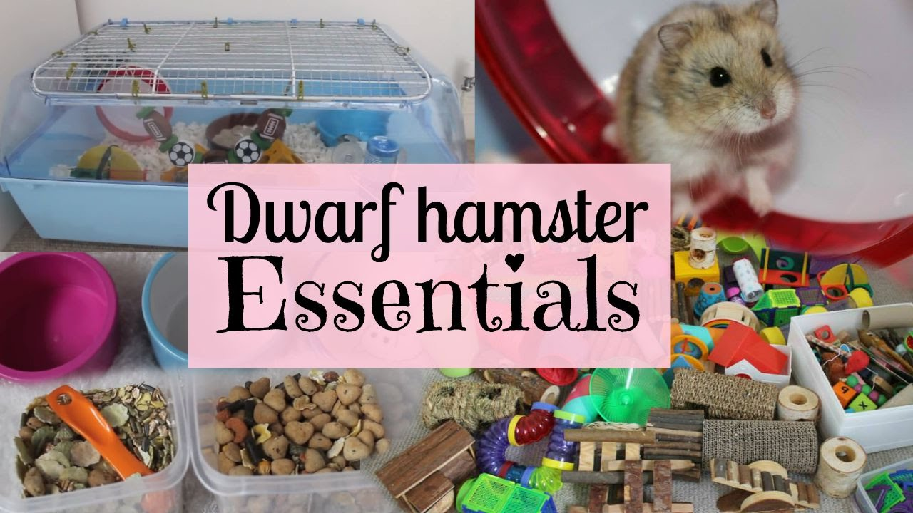 picture How to Make Your Own Hamster Bedding