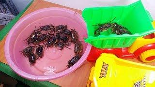 bắt Con Cua chơi xe chở cát - culytv real crab toy for kids
