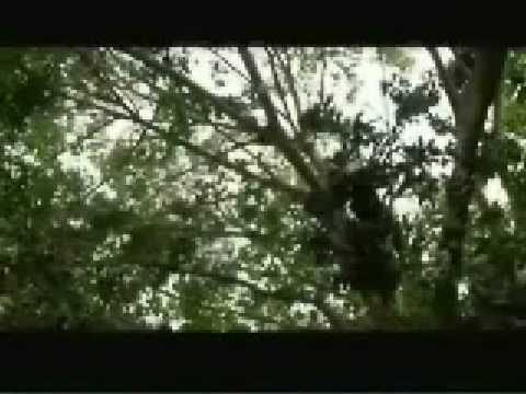 Apocalypto Bisaya Haring Buang 4 video