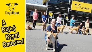 A Right Royal Reunion! | Dogs Trust Manchester