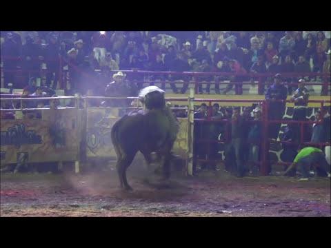 El Amo y Señor de la Grapa, El LATIGO vs GATO de San Juan en Tepetlixpa 2013 (20 DESTRUCTORES)