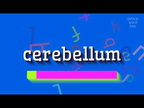 """How to say """"cerebellum""""! (High Quality Voices) thumbnail"""