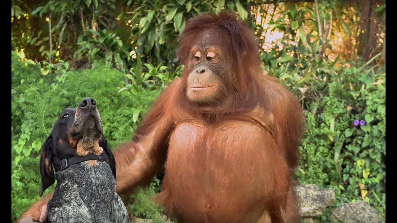 Pictures of woman fucked by chimpanzee naked scene