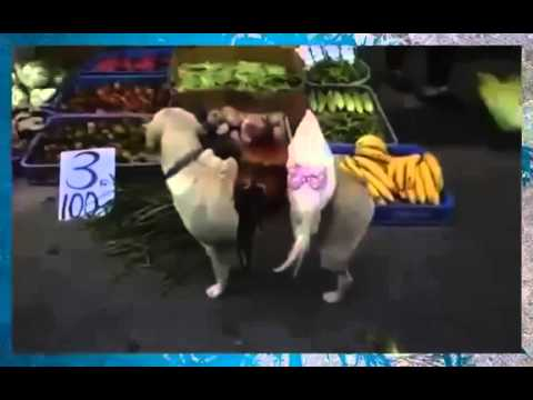 Прикол собака толкает петухов на рынке