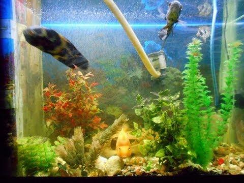 Светильник для аквариума своими руками (+ фото)