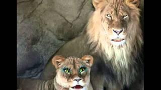 June 3.avi   Hungry Lions!  Daniel 6:11-27  2 Timothy 4:18