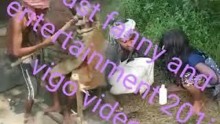 Bast fanny and entertainment 201i vigo video