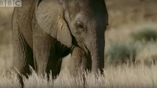 Orphaned Baby Elephant Struggles To Survive | BBC