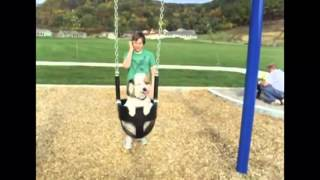 Just A Dog On A Swing