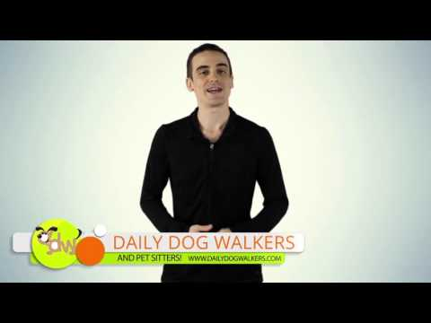 Daily Dog Walkers & Pet Sitters Introduction