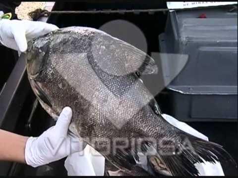 Polícia apreende 90 quilos de pescado no bairro Santo Inácio
