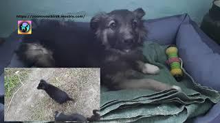 Щенок найденный на свалке едет домой удочерение Арники из приюта Дари добро  puppy from the shelter
