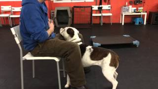 Aggressive Dog Collar Counter Conditioning