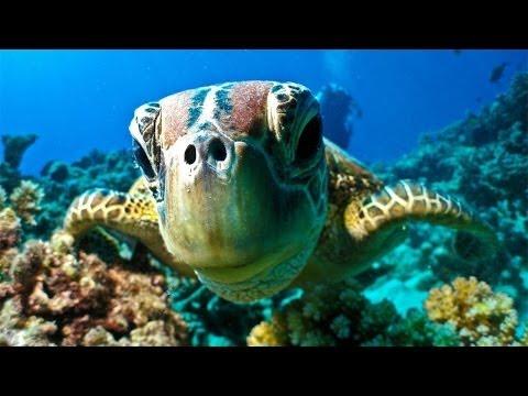 Great Barrier Reef Dive &amp  Snorkel   Port Douglas Australia