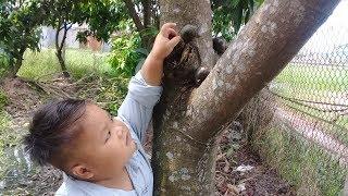 Đồ chơi trẻ em bé pin ốc trên cây ❤ PinPin TV ❤ Baby toys snail tree