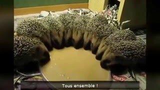 Vidéos Drôles D'animaux Compilations - 2016